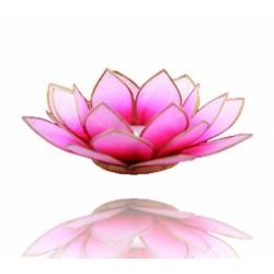 Lotos svícen Capiz růžovobílý se zlatavými lemy