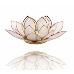 Lotos svícen Capiz přírodně bílý se zlatavými lemy