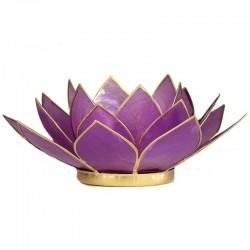 Lotos svícen Capiz lila fialová se zlatavými lemy
